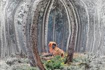 Waldtier von Bernd Seydel