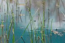 Gras I by Bernd Seydel