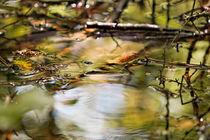 Wasserglanz von Bernd Seydel