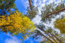 Fall. Forest. Sky. von mnwind