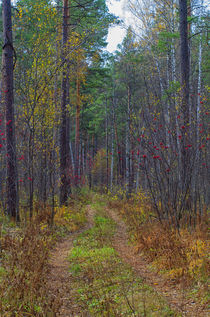 Fall. Forest. Road. by mnwind