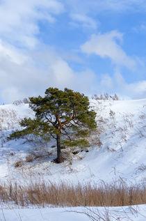 Winter. Pine. Sky. von mnwind
