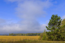 Field. Day. Cloud. von mnwind