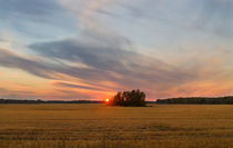 Field. Evening. Sun. by mnwind