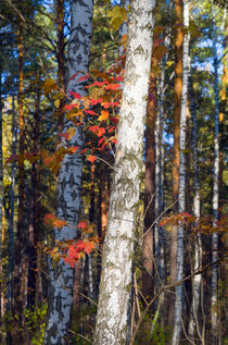 Fall. Forest. Branch by mnwind