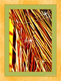 'Bamboo' by Sandra Vollmann