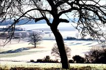 A Walk in the Wintertime von Sandra  Vollmann