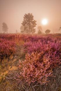 Märchenhafte Heide von markusBUSCH FOTOGRAFIE