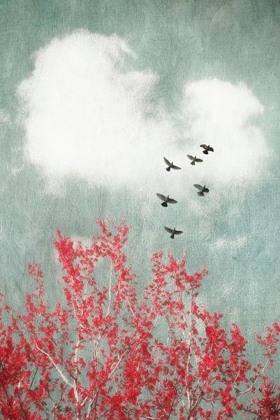 Whenbirdsfly