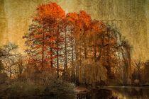 Der Teich im Herbst von mroppx