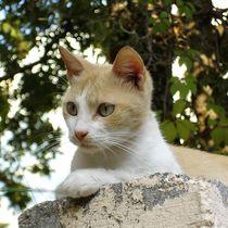 Catwatch von Angelika Thomson