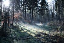 Weihnachten im Feenwald von Angelika Thomson