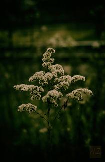 ..einfach ..Herbst by Wladimir Zarew