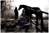Morning Talks Horse by Sandra  Vollmann