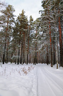Winter. Forest. Road von mnwind