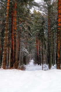 Winter. Forest. Road by mnwind