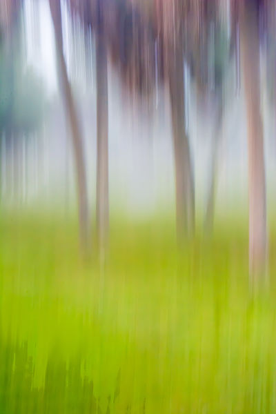 Moving-trees-01-20-30-dsc0015