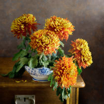 Rote Chrysantheme by Nikolay Panov