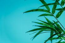 Bambus von mroppx