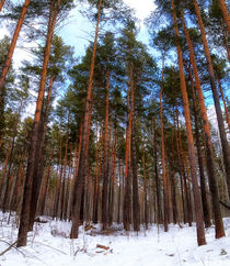 Winter. Forest by mnwind