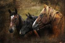 3 of a kind von artfulhorses-sabinepeters