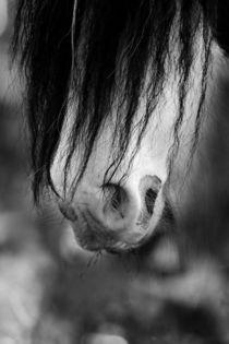 Harlekin von artfulhorses-sabinepeters