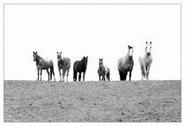 welcome von artfulhorses-sabinepeters