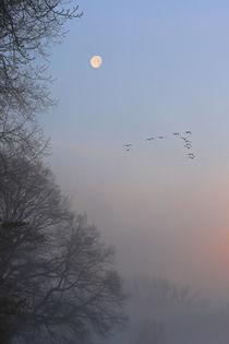 Vorbei am Mond von Bernhard Kaiser