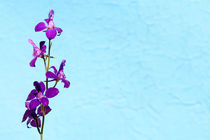 Purple Delphinium Space to Think Print von John Williams