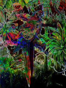 Macaws In Tropical Paradise At Night von Blake Robson
