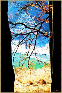 Beautiful from Nature von Sandra  Vollmann