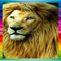 Lion With Rainbow Border by Blake Robson