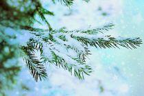 Merry Christmas! von Heidi Piirto