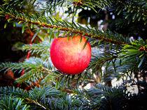 Weihnachtsapfel von Zarahzeta ®