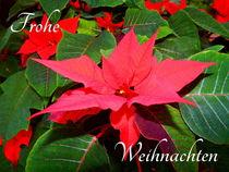 Frohe Weihnachten! by Zarahzeta ®