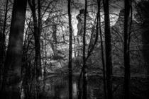 Externsteine Teutoburger Wald #1 by Colin Utz