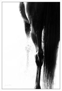 Backsideview von artfulhorses-sabinepeters