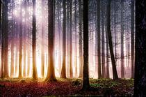Herbststimmung im Wald by Nicc Koch