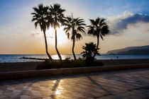 palm trees along the beach promenade of Almeria, southern Spain, Andalusia von Jessy Libik