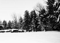 winterspaziergang von micha gruenberg