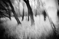 rascheln im unterholz von micha gruenberg
