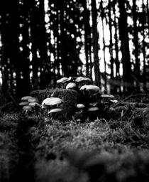 Mushroom on a Tree von dsl-photografie