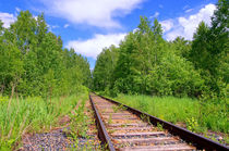 Summer. Forest. Railway by mnwind