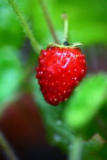 Erdbeere von Simone Marsig