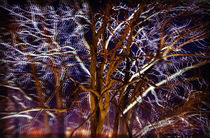 Mystic tree von Leopold Brix