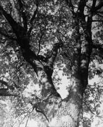The Tree by dsl-photografie