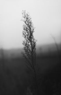 Stand Alone by dsl-photografie