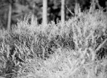 The Grass by dsl-photografie