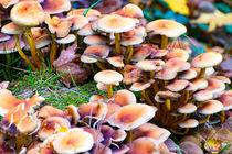 Pilze im Wald by mnfotografie