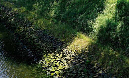 La-ruta-verde